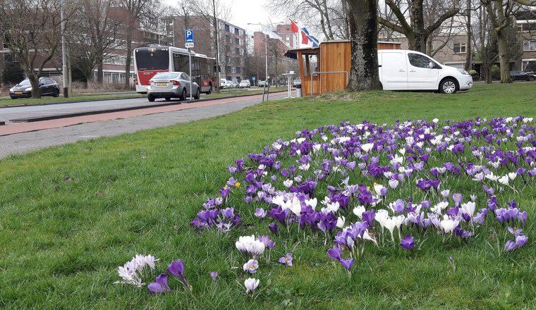 Wijkonderhoud gemeente Groningen toekomstproof